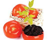 помидор в помидоре